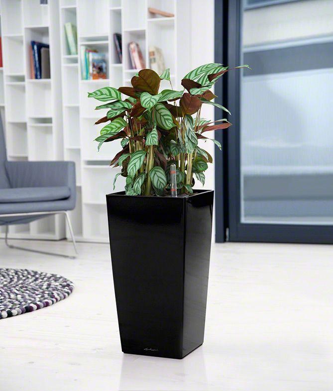 477 besten lechuza planters bilder auf pinterest pflanzen hochglanz und pflanzenk bel. Black Bedroom Furniture Sets. Home Design Ideas