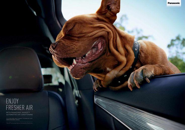Panasonic Nanoe Automotive Air Conditioning: Blissful dog