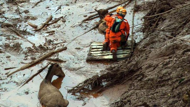 Les secours ont finalement réussi à extraire le cheval.