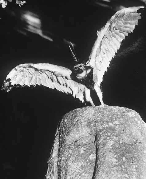 secret fauna by Joan Fontcuberta i Pere Formiguera