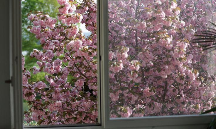 Spring through the window - Tavasz az ablakban