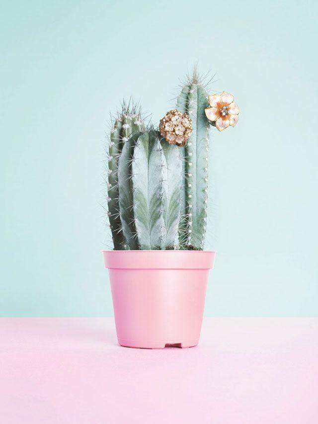 Cactus & pastelcolors