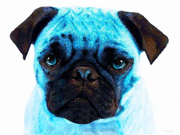Blue - Pug Pop Art By Sharon Cummings