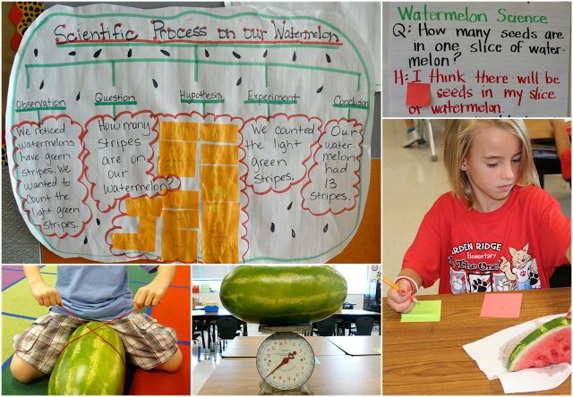 Hands-On Science! Watermelon science first week of school.