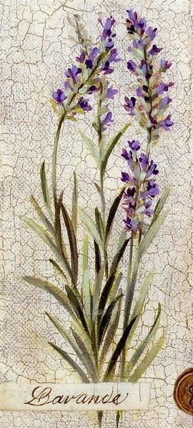 dar vuelta Lavender Art Print