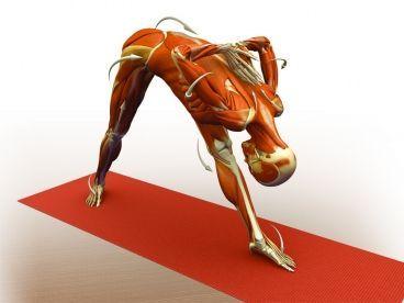 382 best images about yoga asane on pinterest  yoga poses