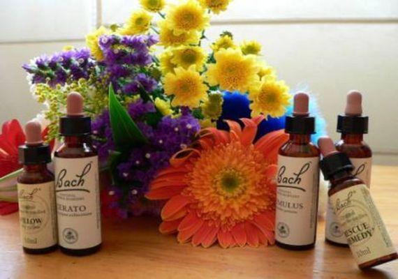 Flores de Bach: medicina natural para todos - http://www.jardineriaon.com/flores-de-bach-medicina-natural-para-todos.html