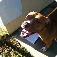 Adopt A Pet :: GUCCI - Fort Myers, FL
