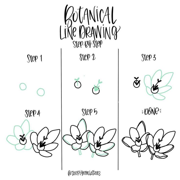 "step-by-step tutorial - pretty flowers | 1,613 Likes, 15 Comments - Peggy Dean (@thepigeonletters) on Instagram: ""Gooood morning, happy Saturday! Aren't these flowers so pretty? . . . #howtodraw #learndrawing…"""
