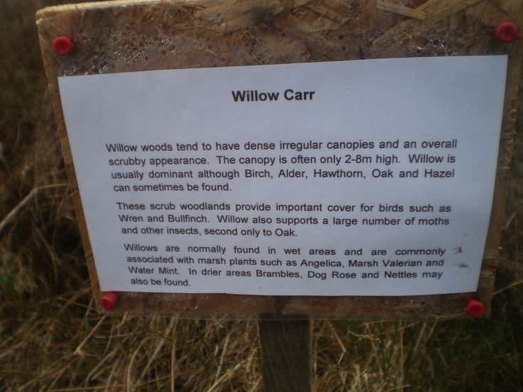 Information about 'Willow woodlands'  from Foxglove Covert, Catterick Garrison, NY UK 2015