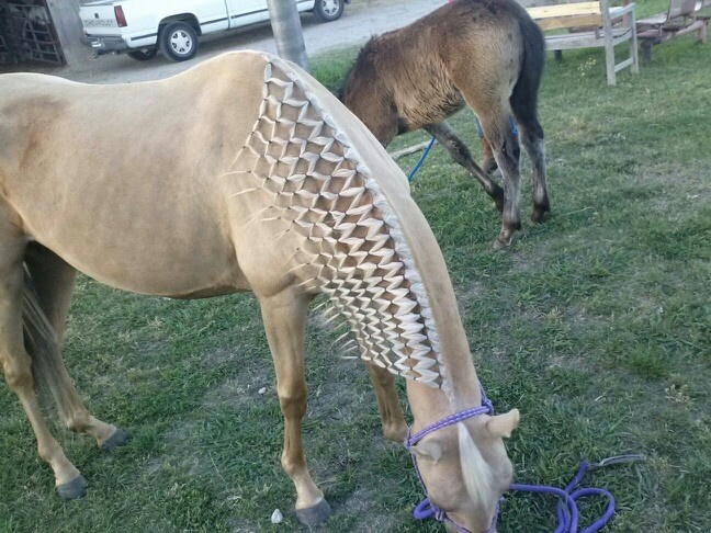 Horse Show Hairstyles Hairstylegalleries Com