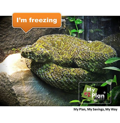 Animal - myezplan Pooh ! Eerie Animal | With myezplan you can discover many interesting places like theaters and historical sites -  | Interesting Animal Tour | Things you must see in Cozumel in Mexico #cute #pets #naturelover #farm #animallovers flickr