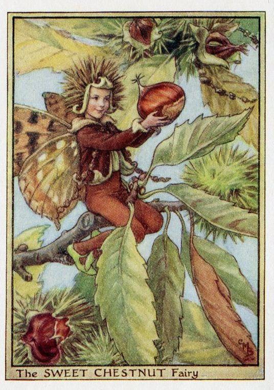 Sweet Chestnut Flower Fairy Vintage Print c1950 by TheOldMapShop