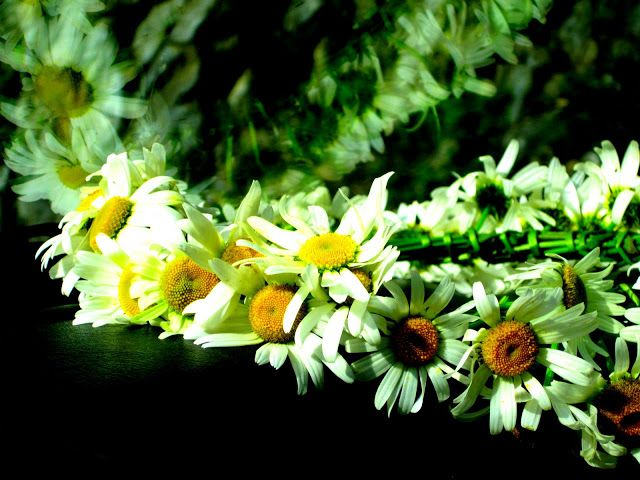 Simplicity - White daisies resting on the dashboard. #photography #daisies #flowers #flower #photos #macrophotography #drive #longdrive #vacation #beauty #nature #whitedaisies #floral #life #relax #simplicity #plants #wreath #movement #serene #hope #inspiration