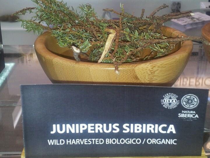 Juniperus Sibirica. Wild Siberian Herbs by Natura Siberica.