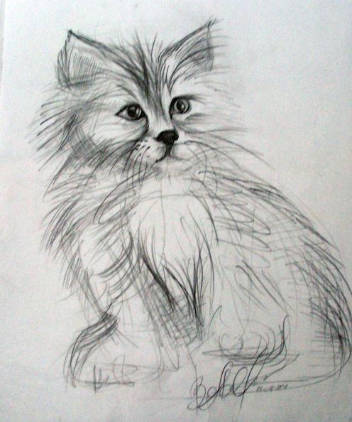 Drawing in pencil (A Kitten)