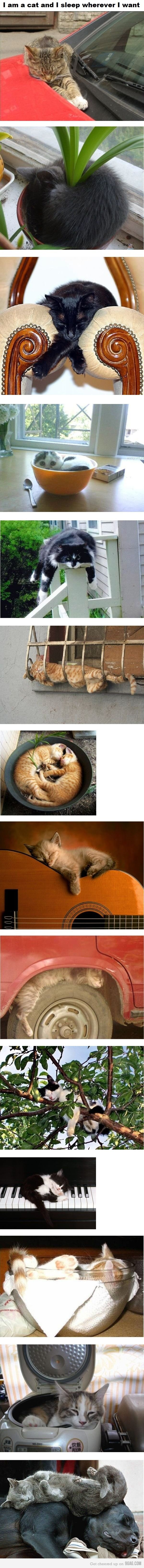 Cats sleep wherever they want to.