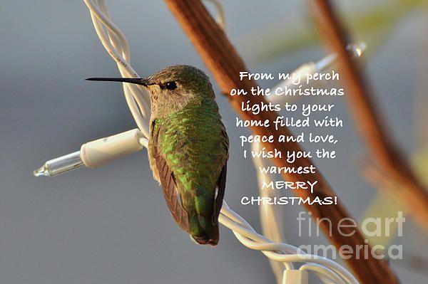#hummingbird #Christmas #DebbyPueschel #lights
