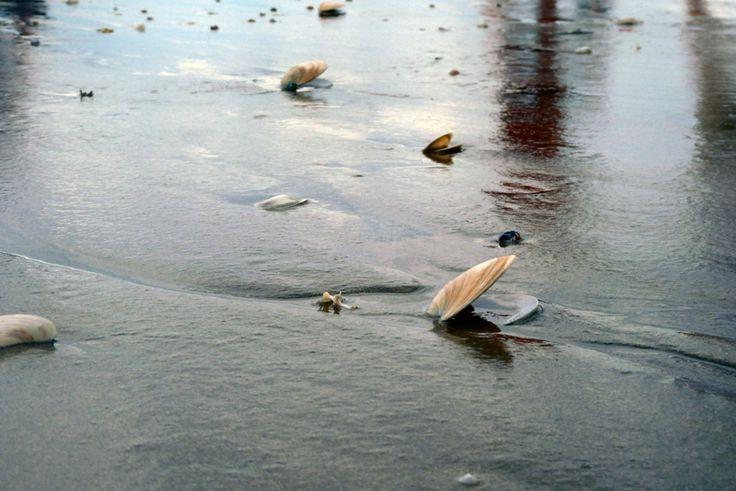 Seashell on Waihi Beach