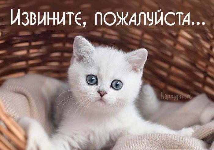 Котята картинки с надписями прости