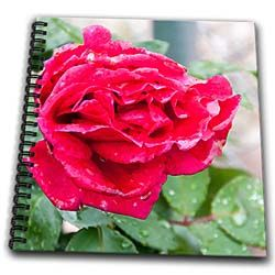 A red rose blossom shot up close in accented sedges Drawing Book