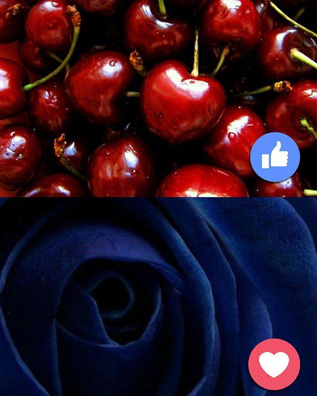 Menurutmu, warna mana yang akan menjadi 2018 Color Of The Year? LIKE jika pilih merah maroon atau LOVE jika memlih warna biru  #EMCOLUX #COLORtorial #catkayubesi #warna #ngecat #surabaya #jakarta #depok #tangerang #bogor #bekasi #bandung #bali #banyuwangi #denpasar #jember #jogja #semarang #solo #kediri #mataram #nusatenggara #lombok #purwokerto #padang #makassar #cirebon #kupang #malang @indonesianrepost @indonesia_kaya @indotravellers @exploresurabaya