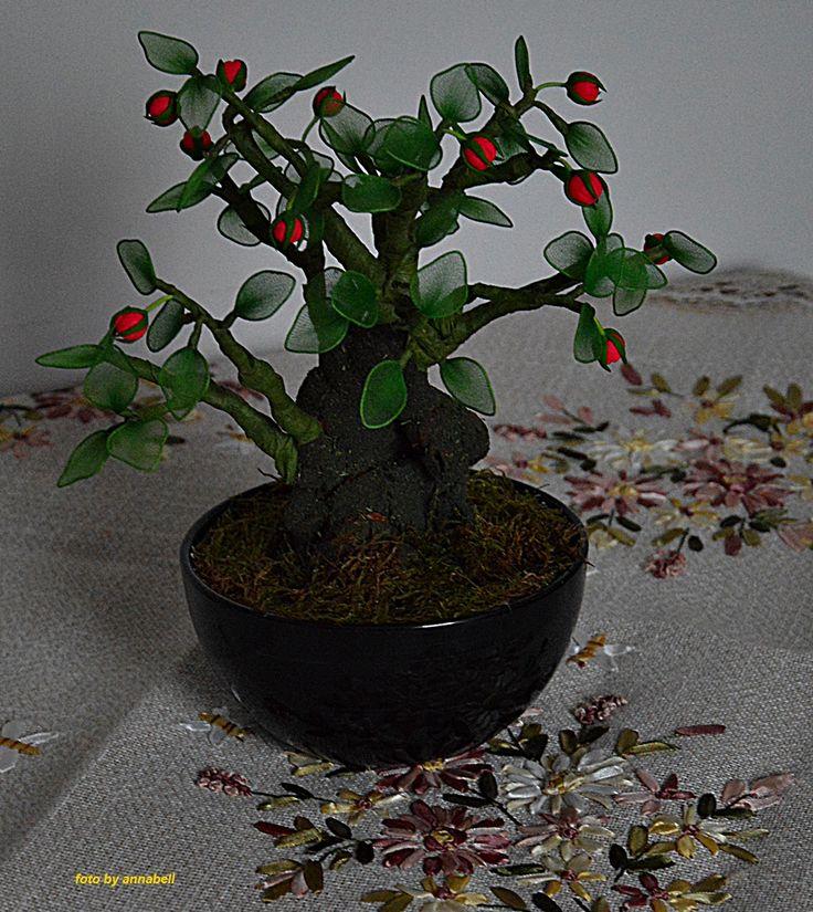 Bimbós bonsaj