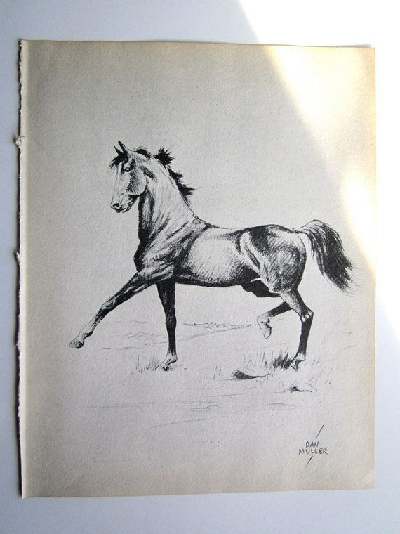 Horse Drawing Horse Sketch Vintage Horses by booksygirl on Etsy