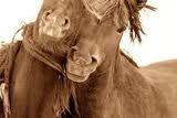 Photo of horses - Robert DutescoHorses B E A Uti