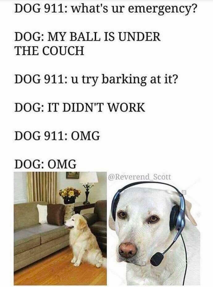 Pin By Cody Ford On Dog Socialization Funny Dog Memes Funny Animal Memes Dog 911