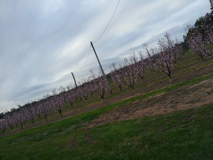 Wineries