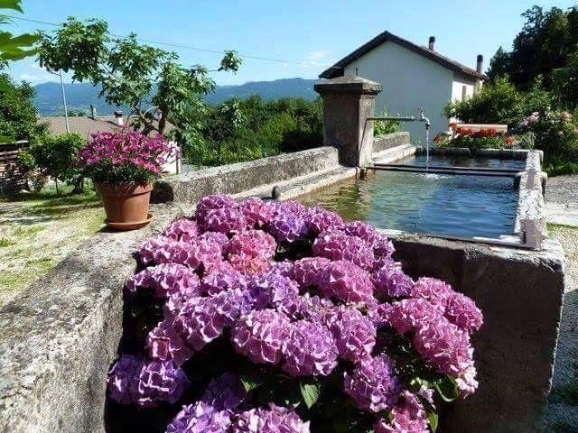 Fontana feltrina Belluno Dolomiti Veneto Italia