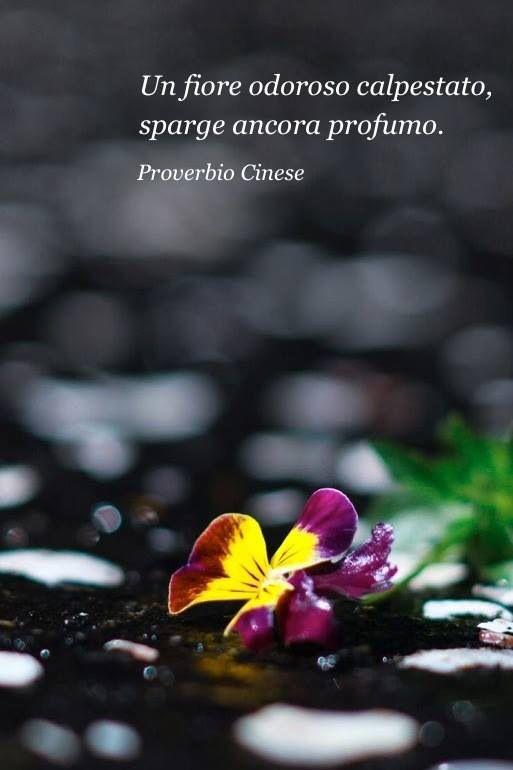 Proverbio Cinese --------------------------------------- Si puo far male alle cose e alla gente, ma non si puo mai distruggerle in totale