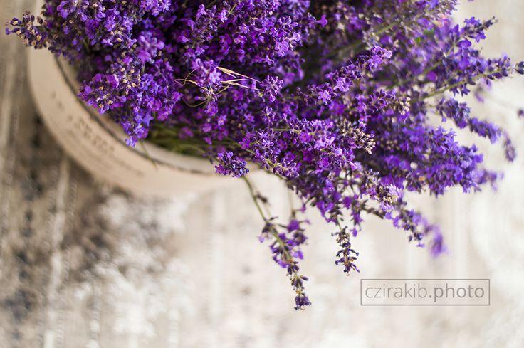levendula, lavender czirakib.photo