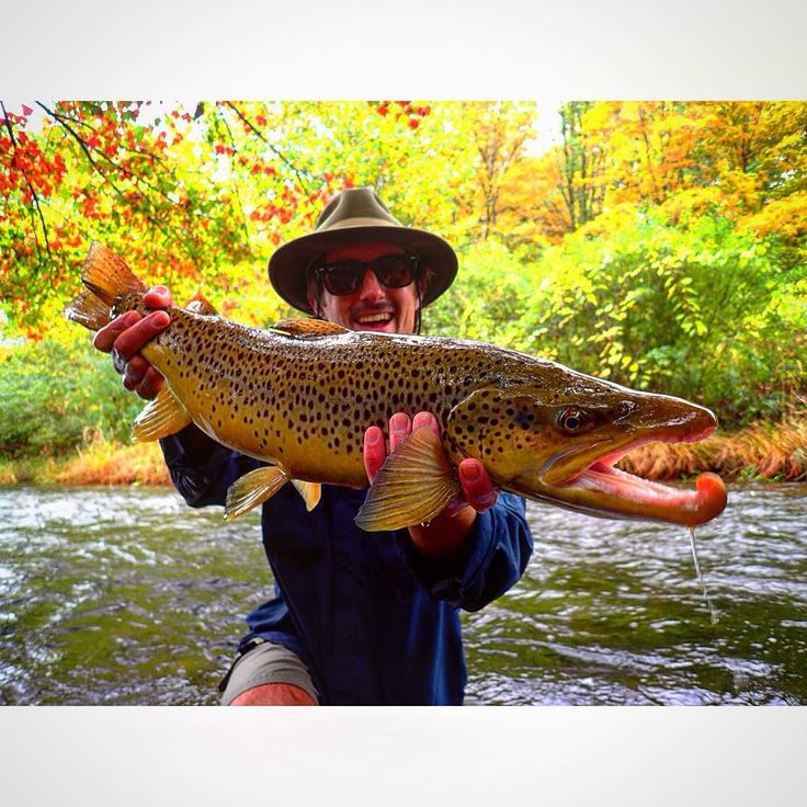 11 best killer rapala lures images on pinterest mj for Best trout fishing near me