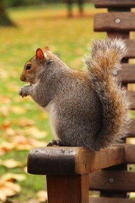 Es lohnt sich in jedem Fall aus Deutschland Erdnüsse(keine salzigen, sondern mit Schale) mitzubringen. Man kann sie auf die Hand legen und die vielen Eichhörnchen kommen und nehmen sie aus der Hand.