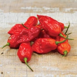 "Hot Peppers Bhut Jolokia ""Ghost Pepper""- Heirloom- Named by the Guinness book of Records as one of the hottest peppers in the world. They turn orange-red can be used to spice up dishes use extreme caution. Heat 1,001,304"