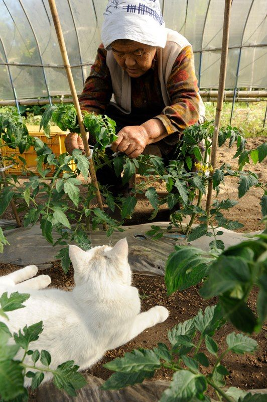 Miyoko Ihara has been taking photographs of her grandmother, Misao and her beloved cat since their relationship began in 2003. Their closeness has been captured through a series of lovely photographs. 2-14-13 / Miyoko Ihara