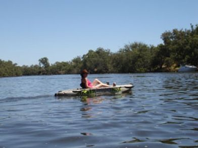 The #MurrayRiver has an abundance of wildlife & birds. Regularly receives visits upriver from dolphins...