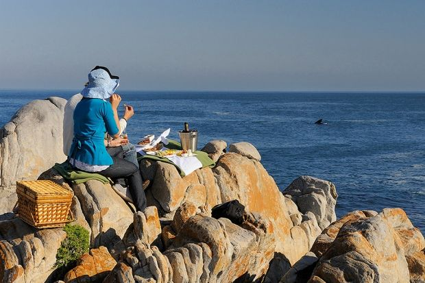 Hermanus Whale Festival 2013 | Some of the best land-based whale watching in the world #whales #WhaleWatching #WalkerBay http://www.grootbos.com/en/blog/travel/hermanus-whale-festival-2013