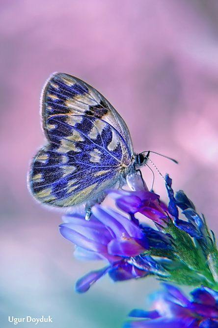 my favorite color and my favorite insect combined into one <3