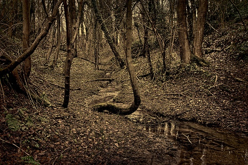 Do These Woods Feel Creepy To You?  This shot was taken in daylight but with the help of Lightroom and Nik Silver Efex Pro 2 things become a little creepy.