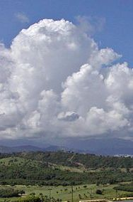 El Yunque National Forest, formerly known as the Luquillo National Forest and the Caribbean National Forest, is a forest located in northeastern Puerto Rico.