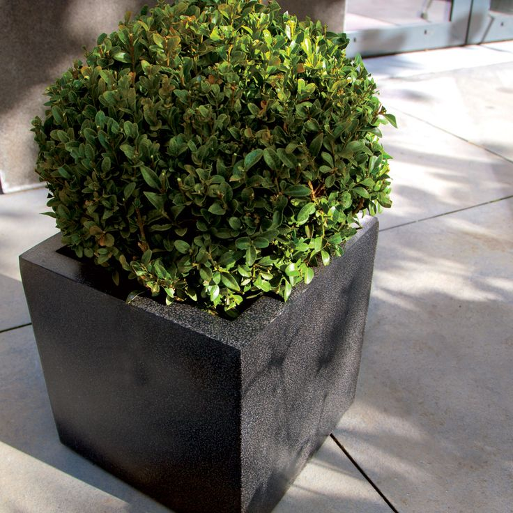 elite pots banatul black info plants indoor matte with planters wide tower concrete outdoor commercial modern large planter