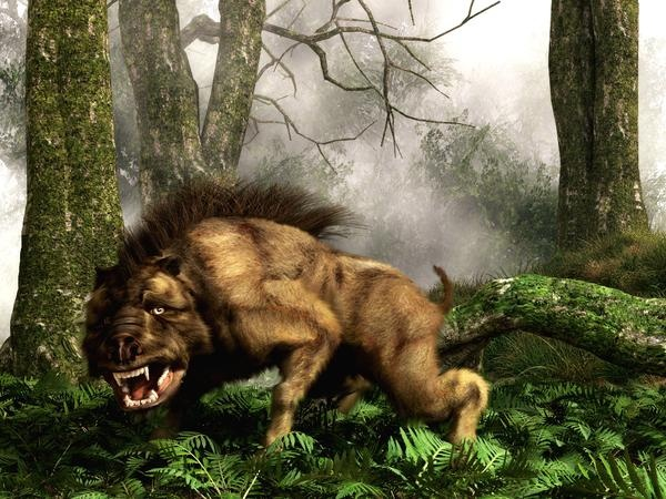 This is not a bear, dog, or fantasy creature. It is a Daeodon, also known as Dinohyus, an ancient relative of the wild boar that lived in North America and went extinct about 18 million years ago.