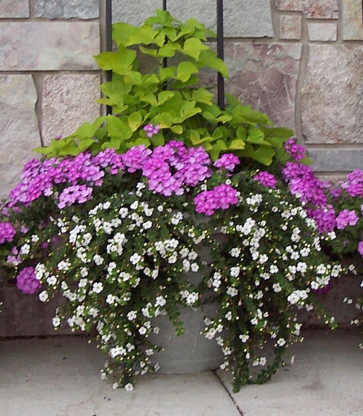 Great tips on container design easy gardening pinterest tips - P allen smith container gardens ...