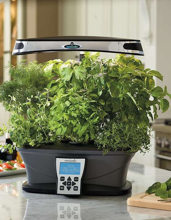 During the winter prepare a hearty salad grown right in for Indoor gardening during winter