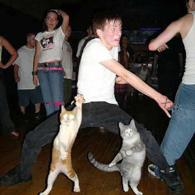 Dance Parties, Parties Animal, Discs, Animal Humor, Funny Pictures, Funny Cat, Funnypictures, So Funny, Cat Parties