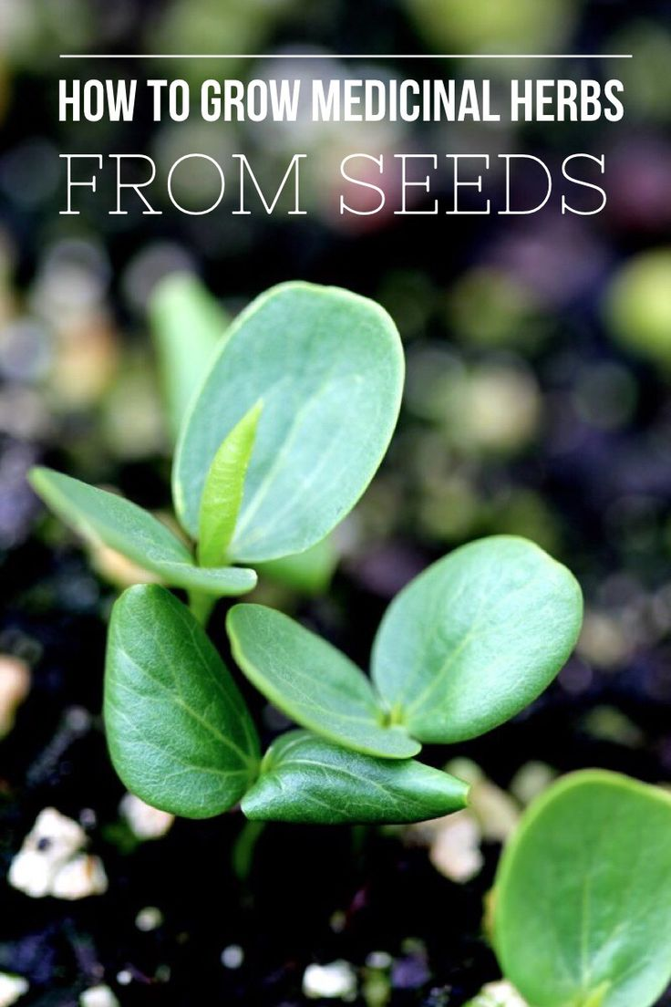 A Guideline to Growing Medicinal Herbs from Seed // by Blog Castanea
