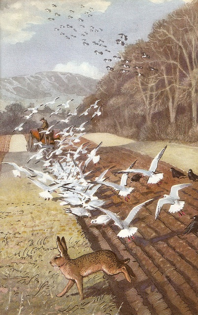 """From """"What to Look for in Winter"""", illus. Charles Tunnicliffe, 1959. http://www.thecharlestunnicliffesociety.co.uk/"""